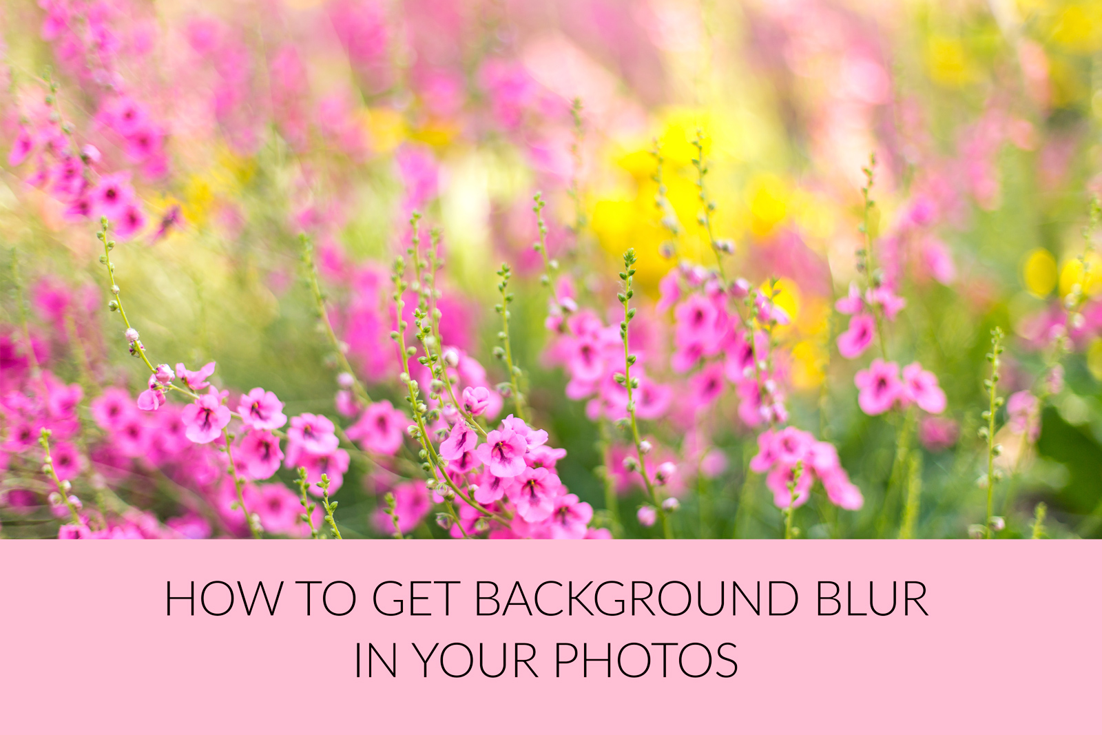 If you'd like to understand more about aperture and shallow depth of field, you might want to look at my post on How to get background blur in your photographs. -