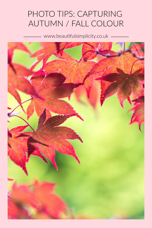 Photos tips: capturing autumn / fall colour