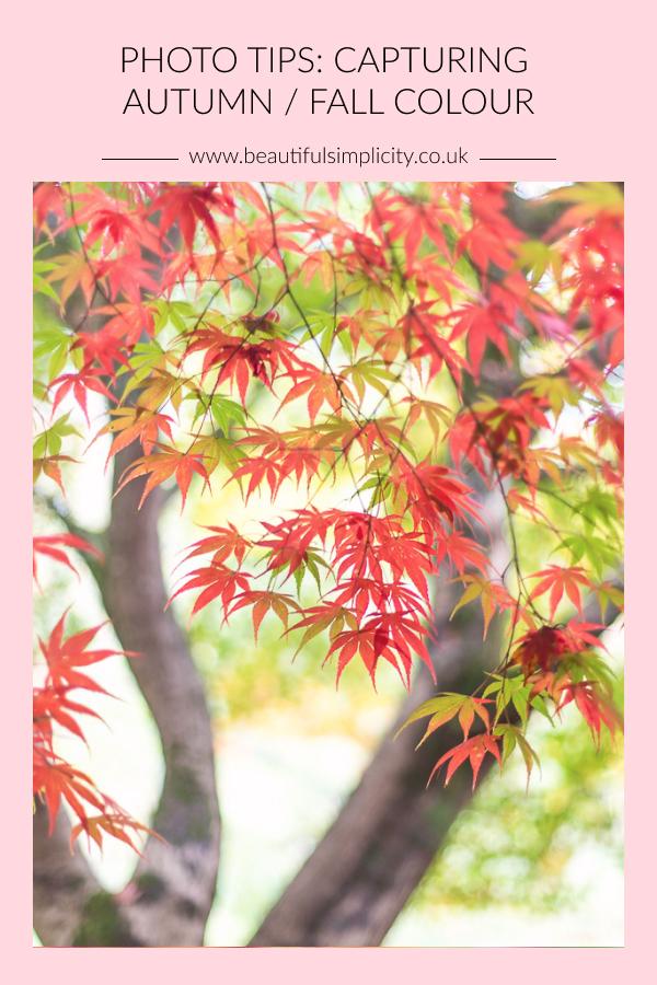 Photos tips: capturing autumn / fall colour