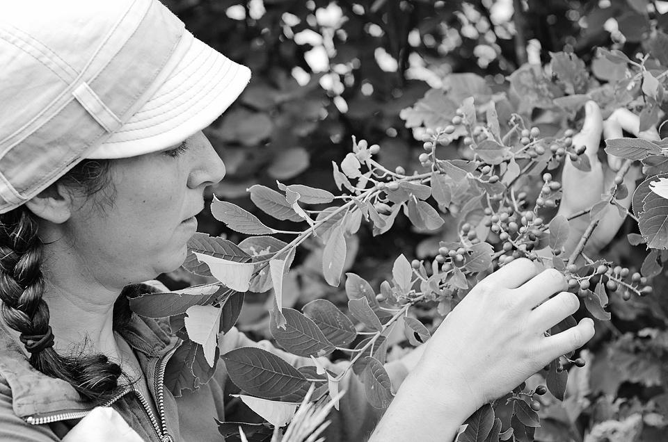 Geneviève and a chokecherry tree.
