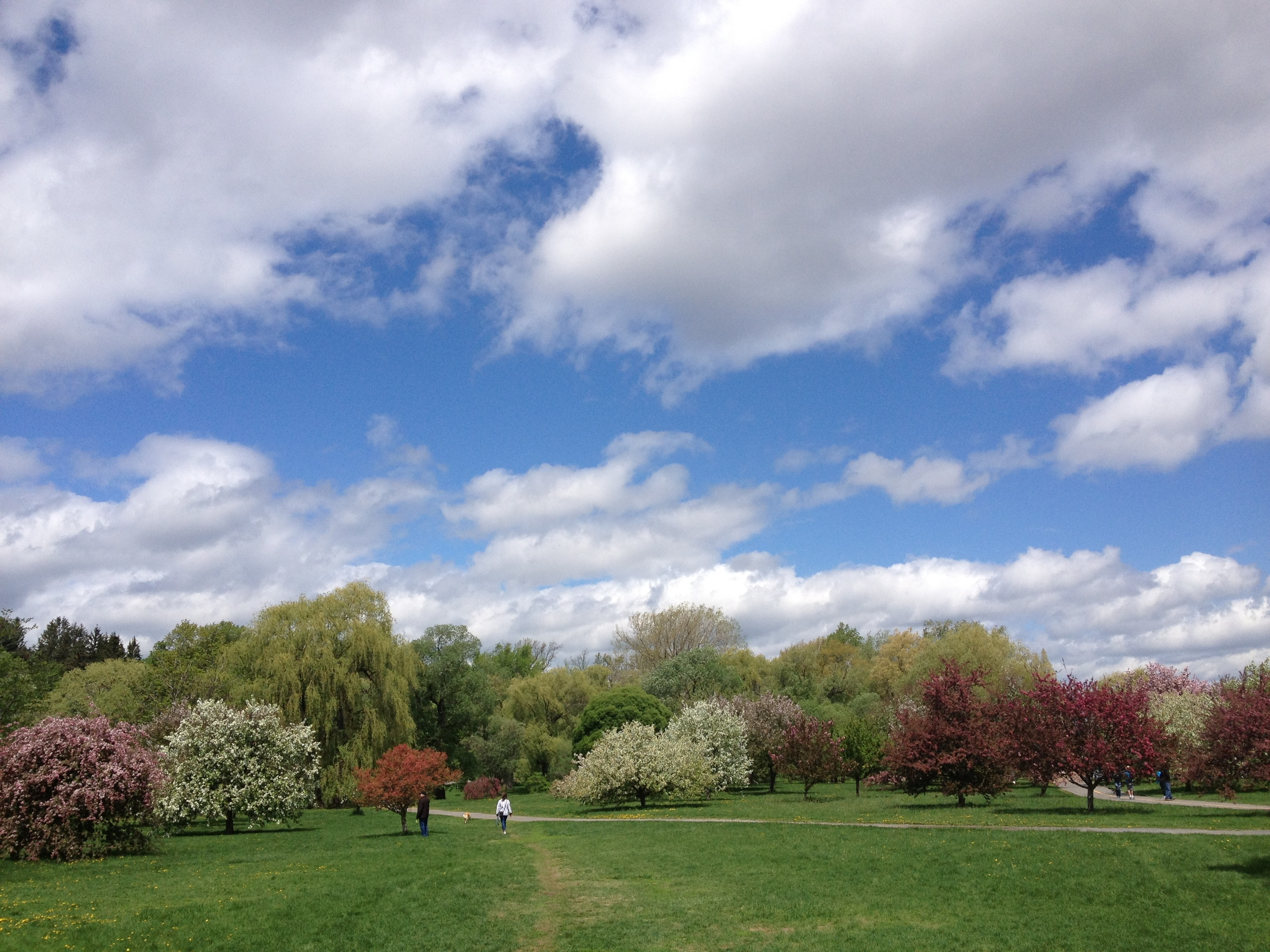 Array of crabapple trees. Photo: C. Earnshaw