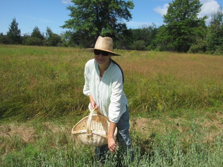 Amber in a field of oats.