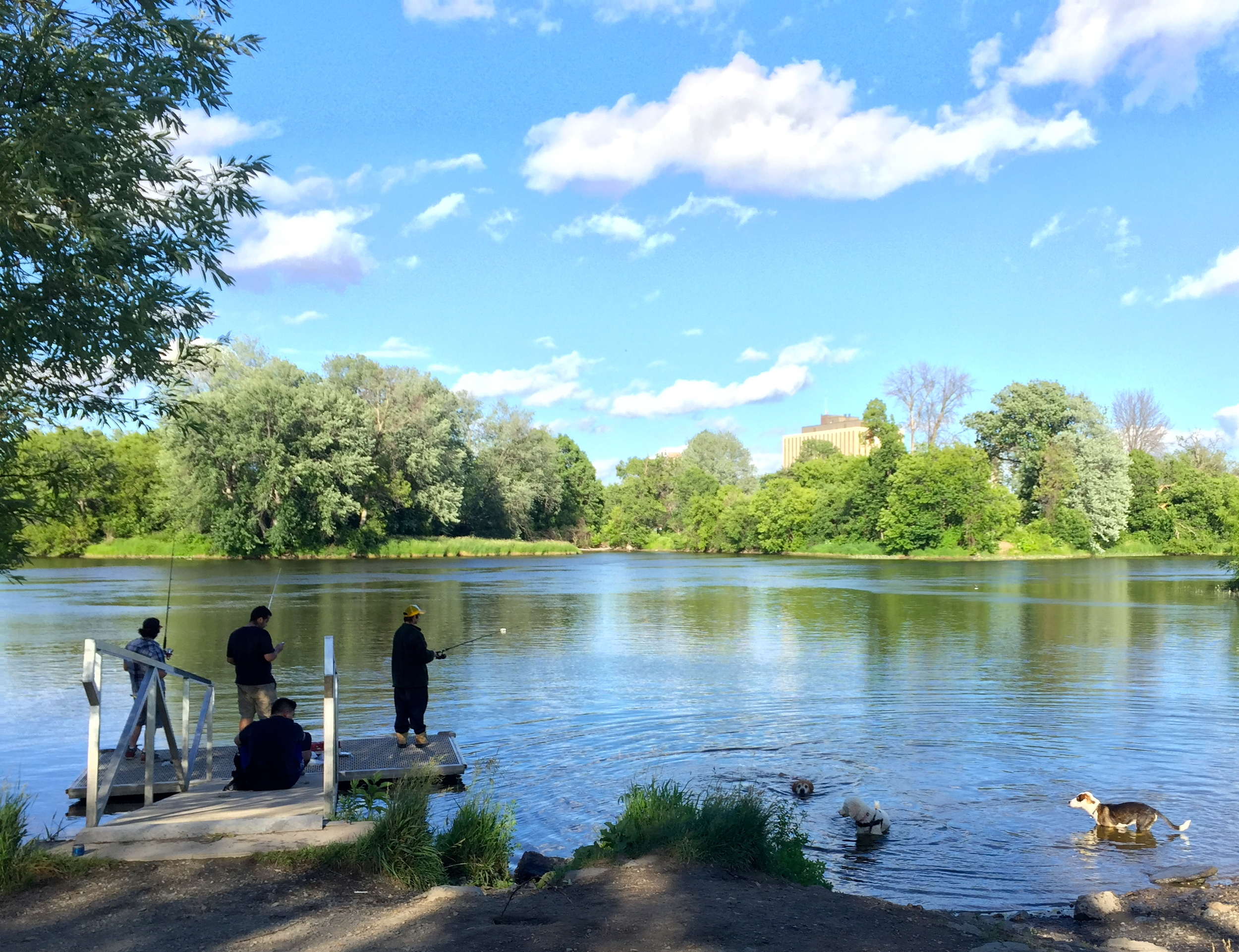 Fishing in the Rideau River at Brewer Park.