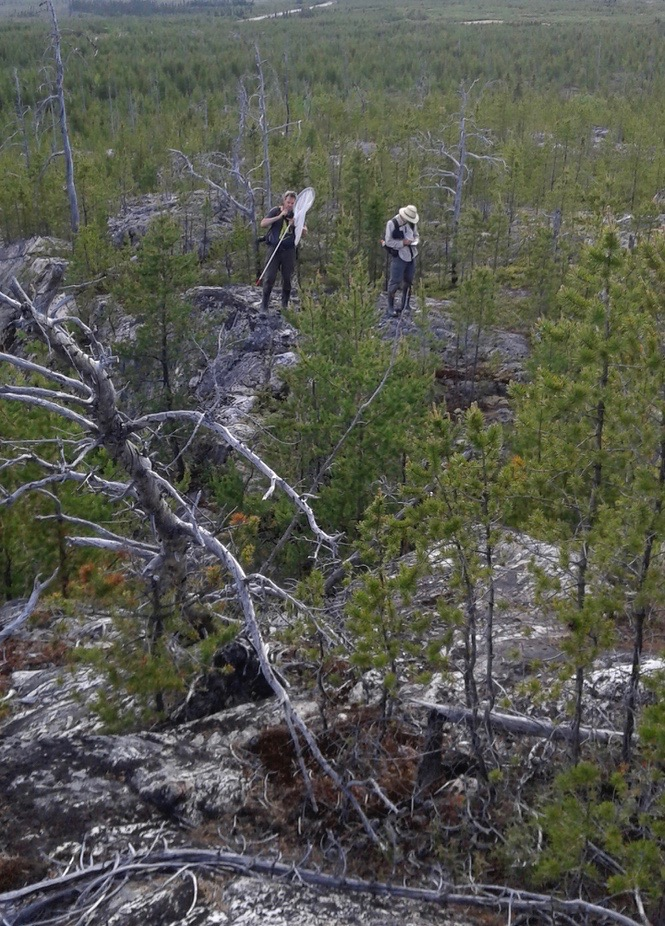 Entomologists and Jack Pine Forest on Canadian Shield, James Bay