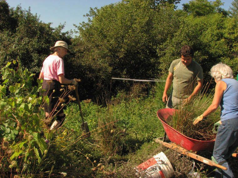 Volunteers working in the garden. Photo: Christine Hanrahan, courtesy of FWG's Photoblog.
