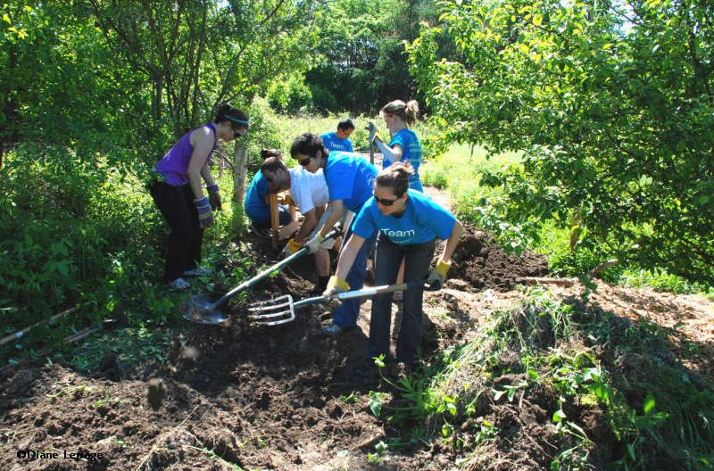 Volunteers at the Fletcher Wildlife Centre working on a trail. Photo: Diane Lepage, courtesy of FWG Photoblog.