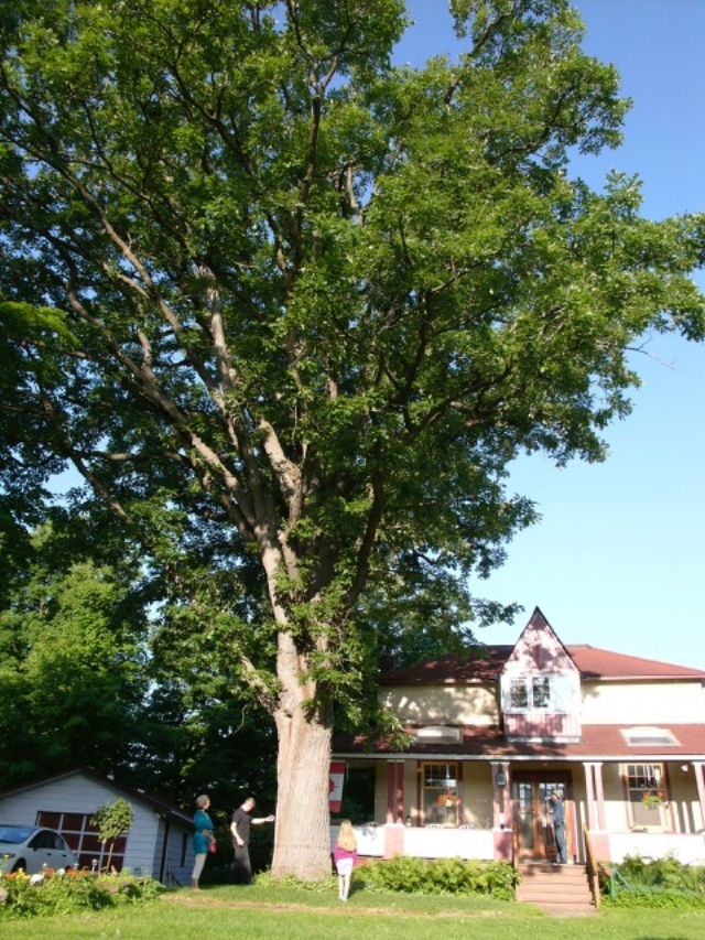 Residents and a large oak in Champlain Park neighbourhood. Photo: Tree Fest Ottawa