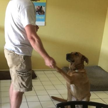 Tbone- Chinook Dog