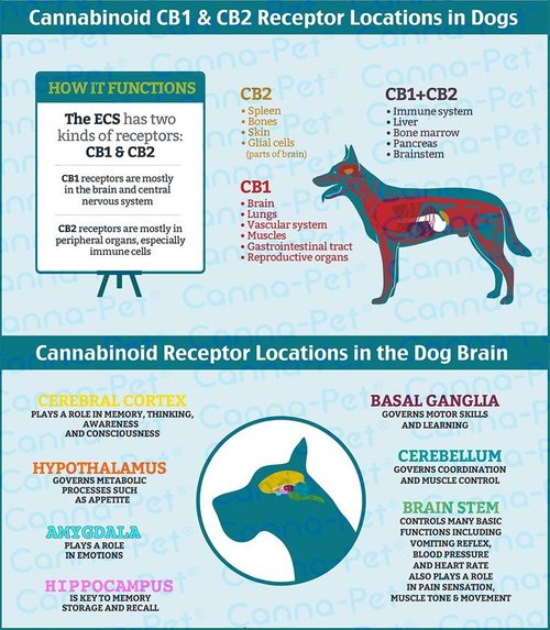 Can CBD Hemp Oil Help Dogs with Anxiety and Reactivity