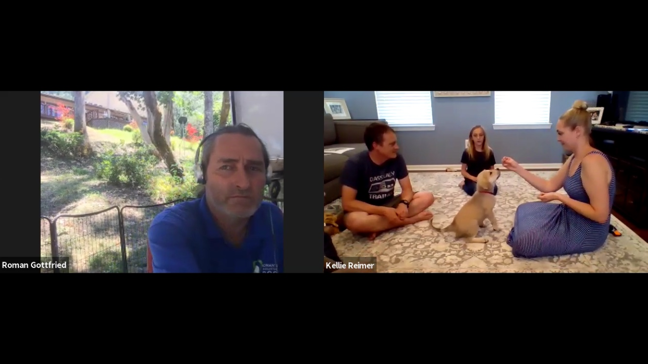 """Thank you for the training session! I love that our kids get to be involved in the training sessions. Kids seem to believe things more from other people, then from their parents. Your advice is great for not only us, but for the kids as well. I think the online sessions are great for our older dog who is uncomfortable with strange males and a timid puppy. It allows us to work with our dogs while they feel safe and confident in their own environment. We are very excited to see just how well we (the humans and dogs) do with you guidance."" Kellie Reimer - Michigan USA"