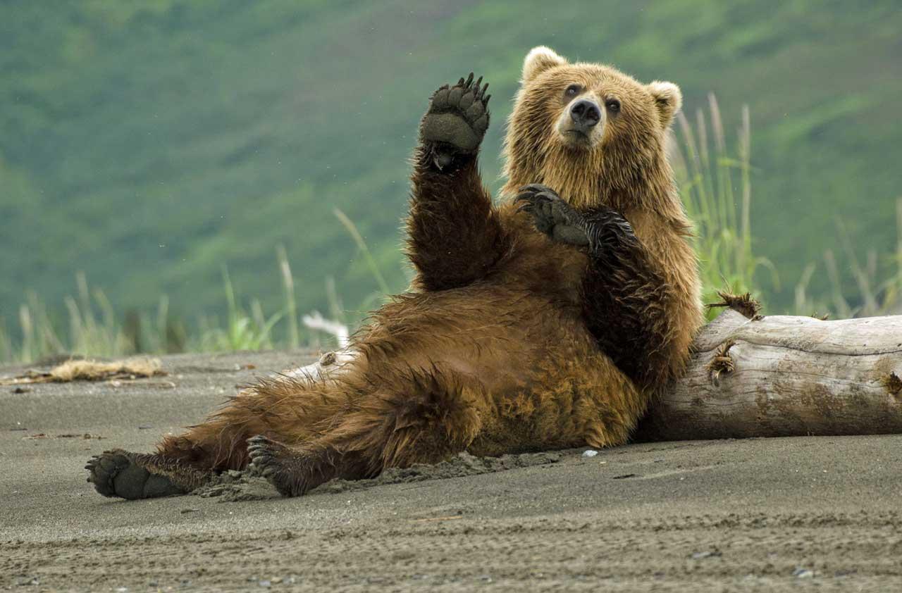 bear waving.jpg