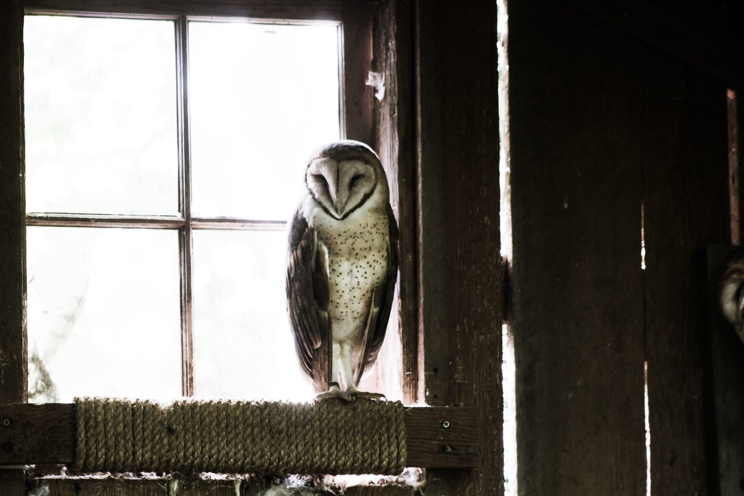 wise owl cliff-johnson-.jpg