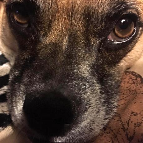 Holly's dog Rhino