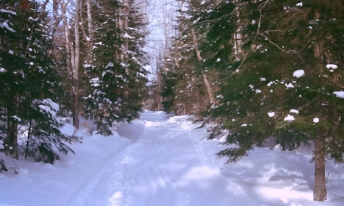 nicely groomed cross country ski trails