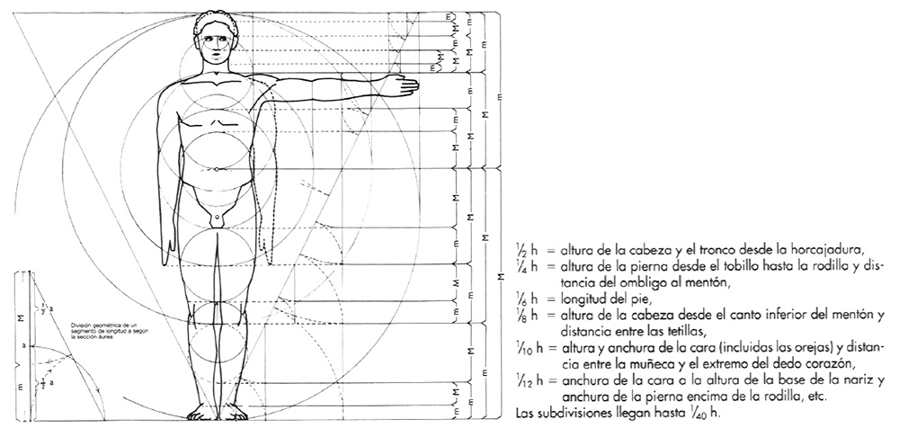 """Proporciones del cuerpo humano basadas en los estudios de A. Zeising. """"Arte de proyectar arquitectura"""" de Neufert"""