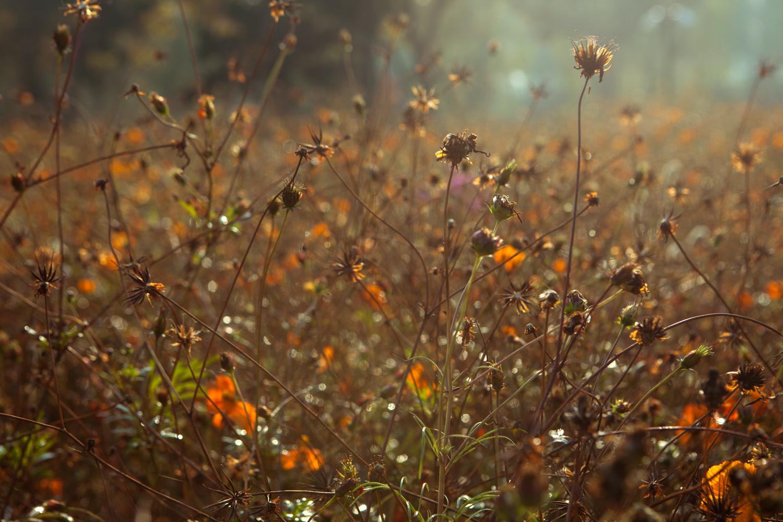 shanghaiflowers.jpg