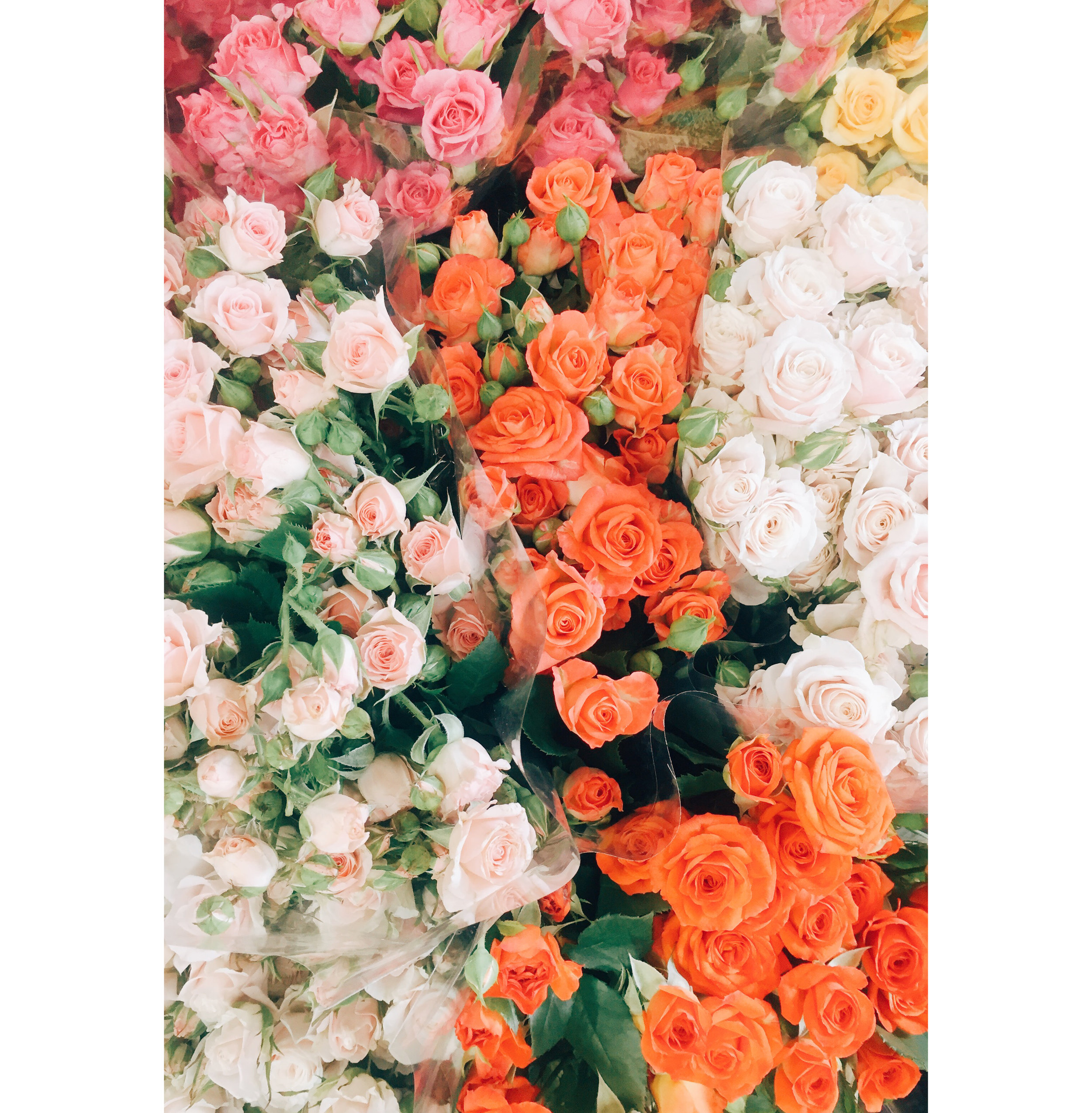 Citrus Colored Roses.jpg