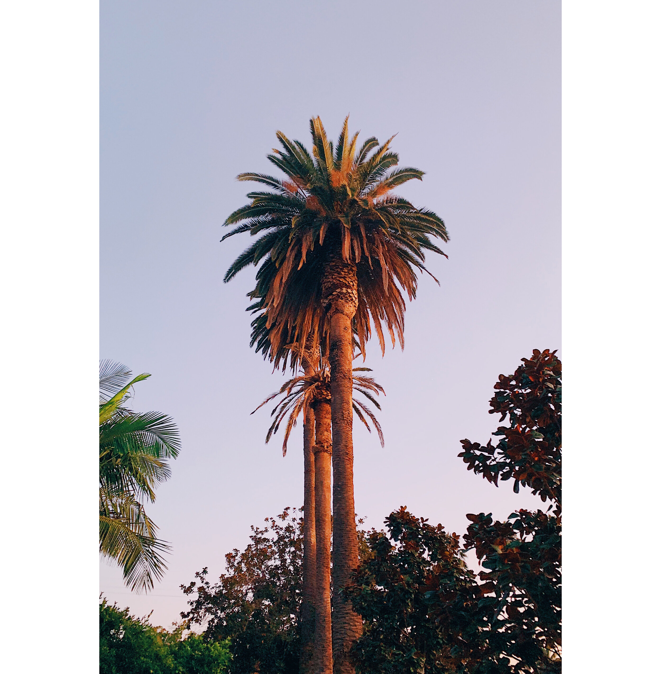 Palm Tree at Golden Hour.jpg