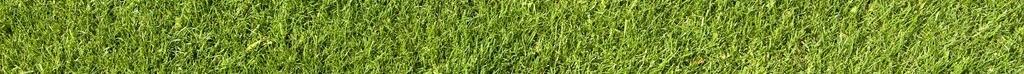 green_grass_texture_01_by_goodtextures.jpg