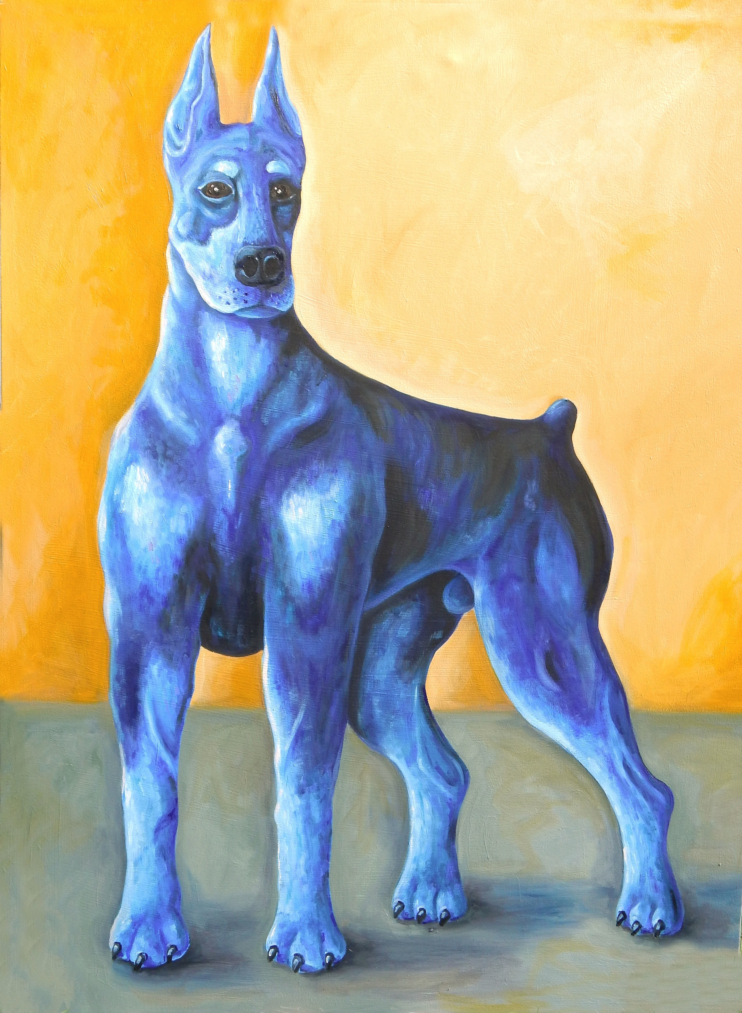 Blue Doberman