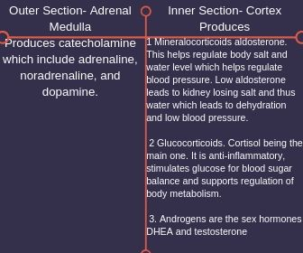 Outer Section- Adrenal Medulla Inner Section- Cortex Produces Produces catecholamine which include adrenaline, noradrenaline, and dopamine. 1. Mineralocorticoids aldosterone. This helps regulate body salt and water l.jpg