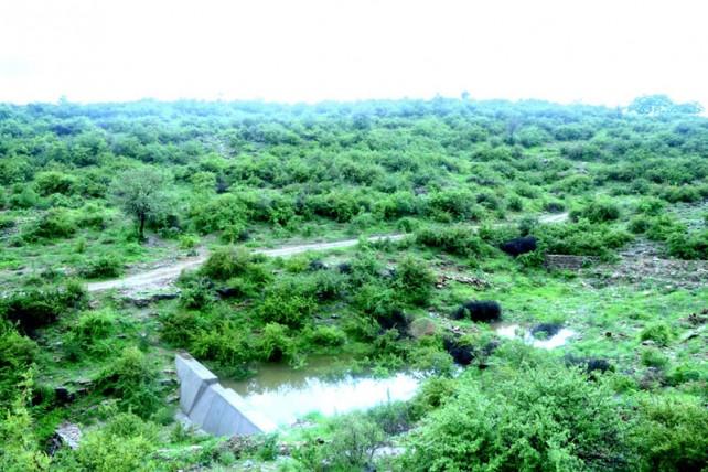 Piplantri Village 6 .jpg