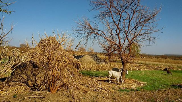 ... simplicity and ruggedness - inspires sheer humility.  Pic by @rupasethi  #explorindya.nofilter #explorindya #southindia #farmingphotographydaily #countryside #india #madurai #instadaily #indiapictures #iphoneonly #travel #traveller.india