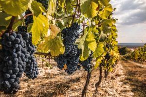 La Cave - Johann W Czech Republic wine - wineyard2.jpg