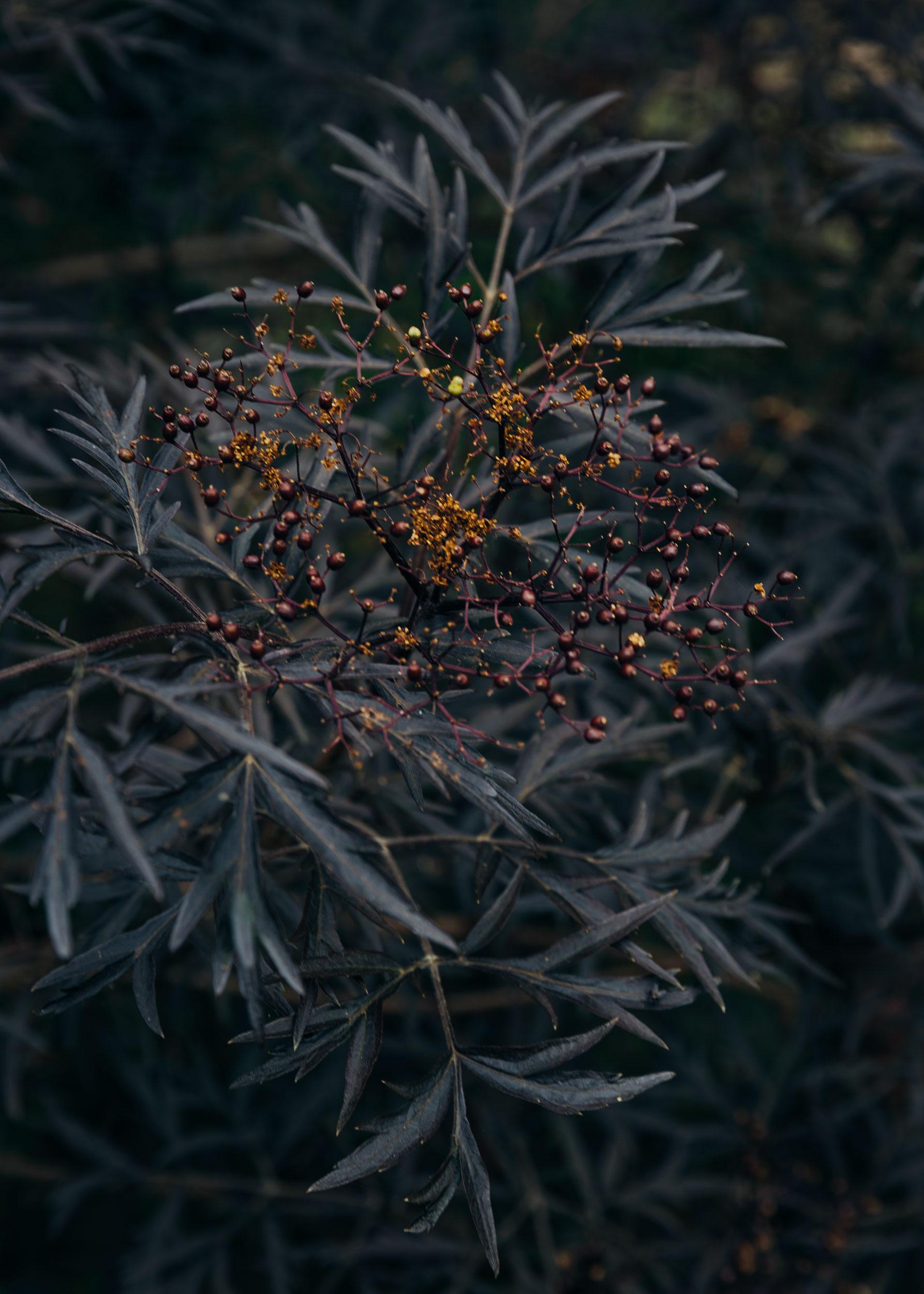 Landscape_Flowers_1_©_Laura_Huhta_Photography.jpg