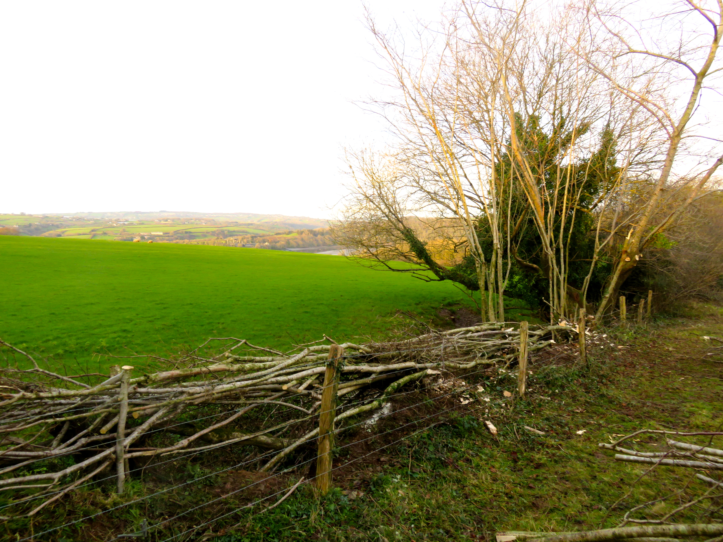 hedge laying services South Devon Cornwall Plymouth services UK south west England Chris Bond