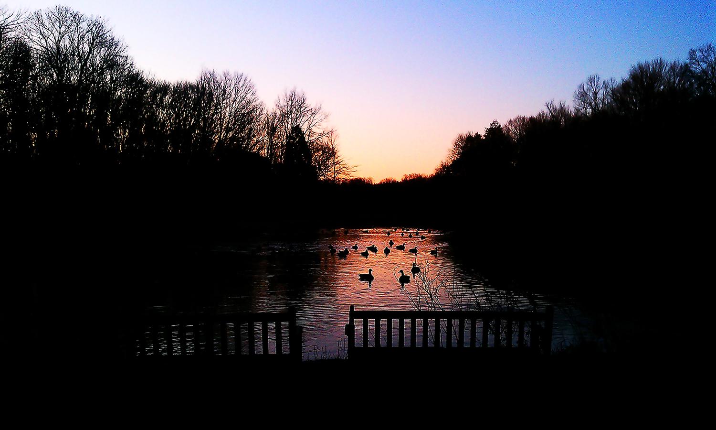 Linda Park Mountain Lakes Sunset Ducks.jpg