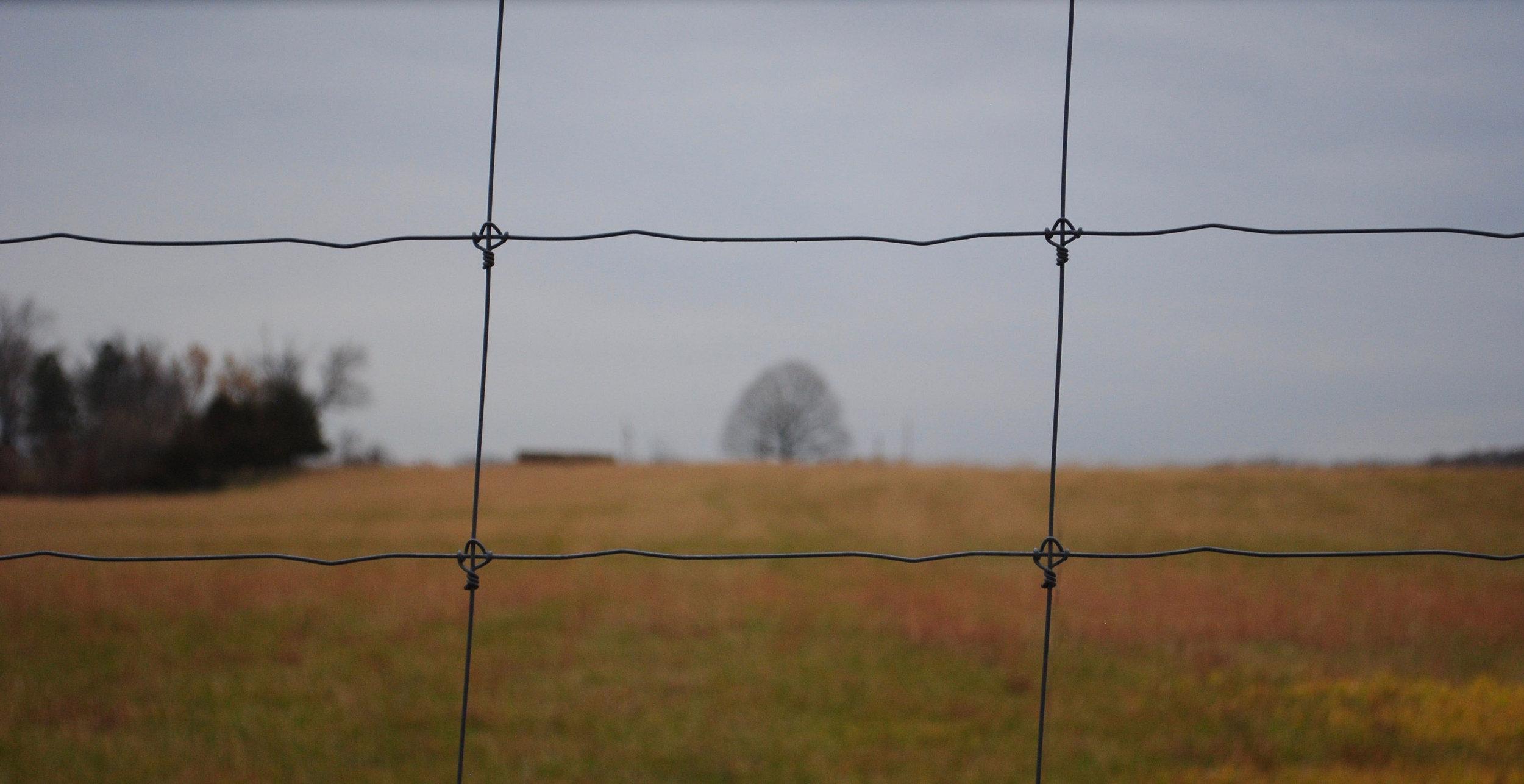EllaNadeau-Tree.jpg