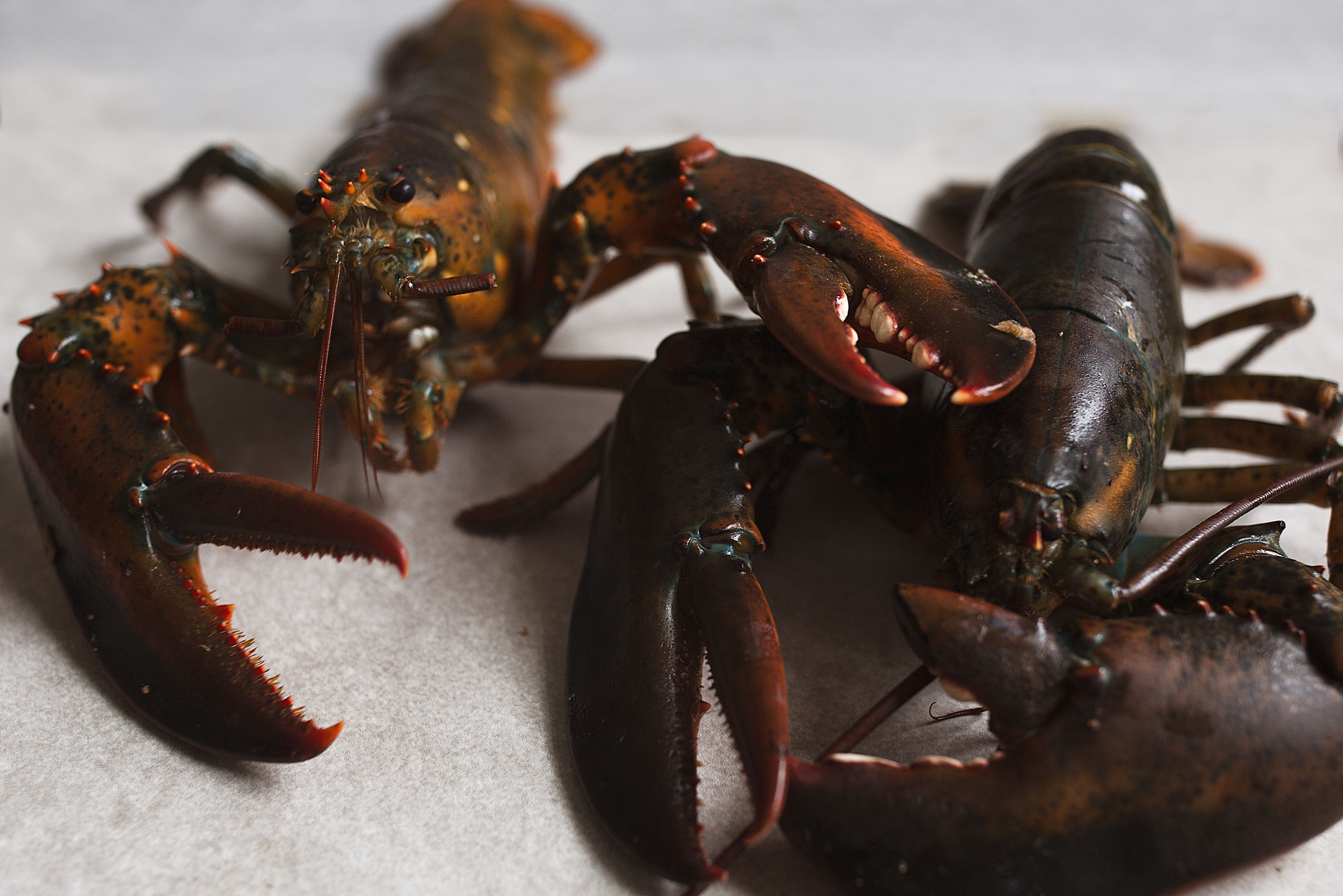 lobsters for surf and turf