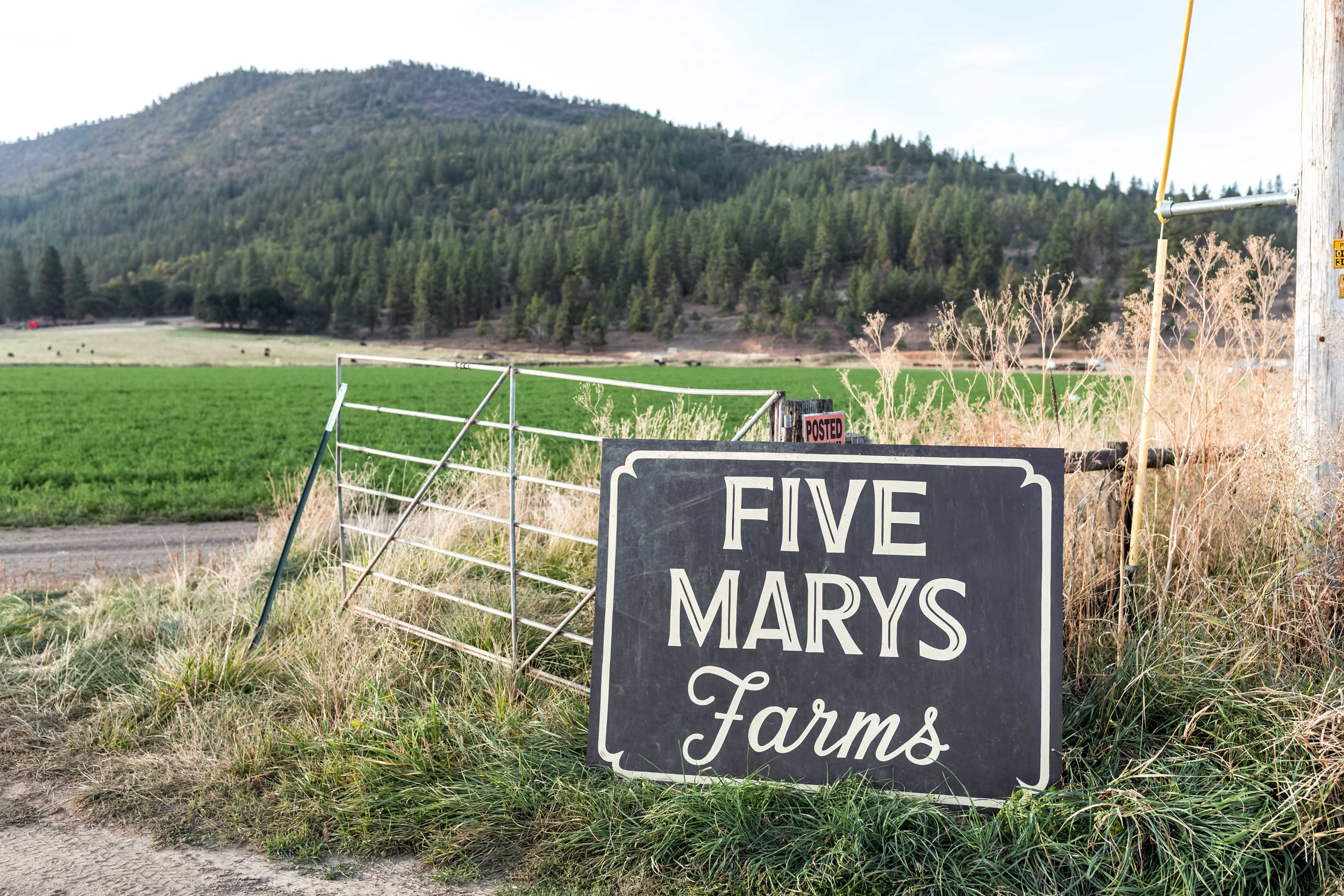 five marys farm sign with american lamb cooking with cocktail rings