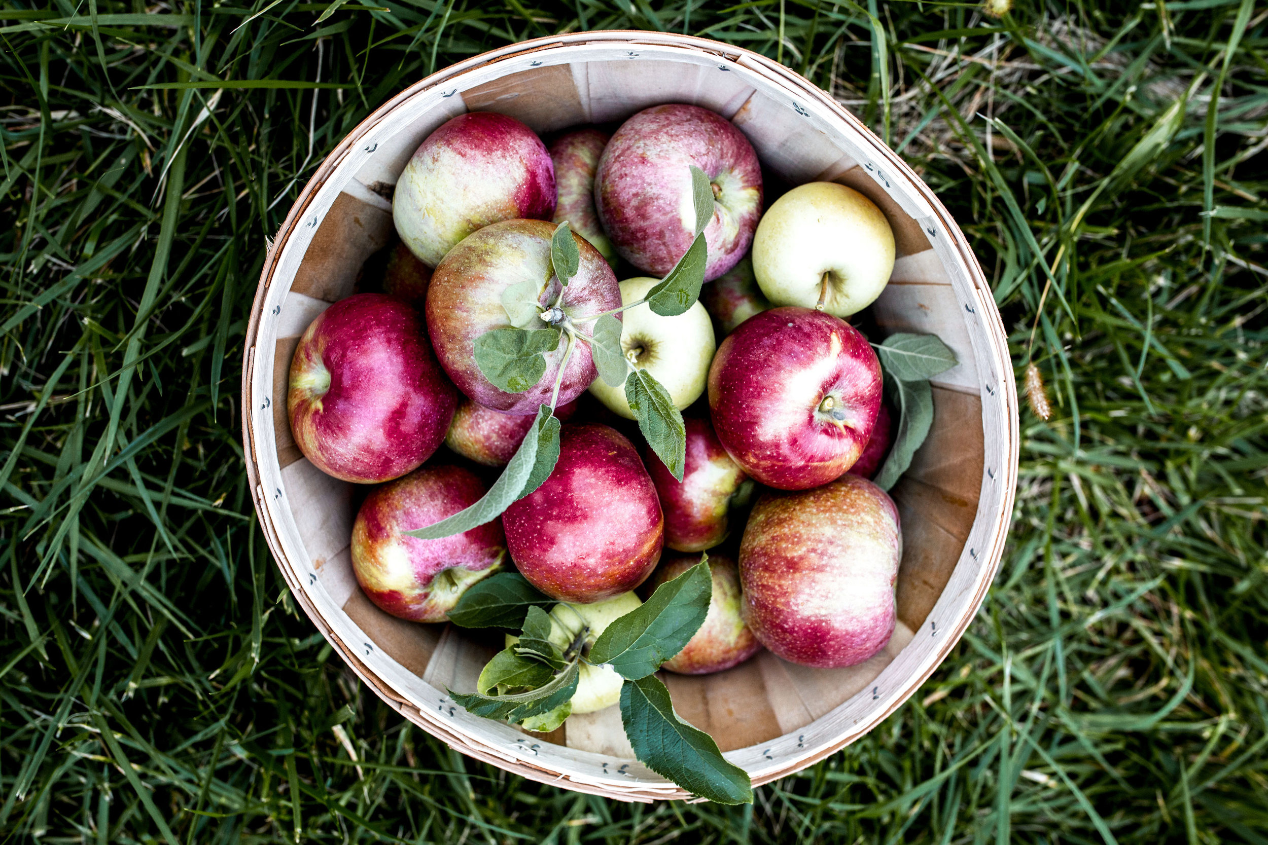 apple-cider-donuts.jpg apple-picking-basket.jpg