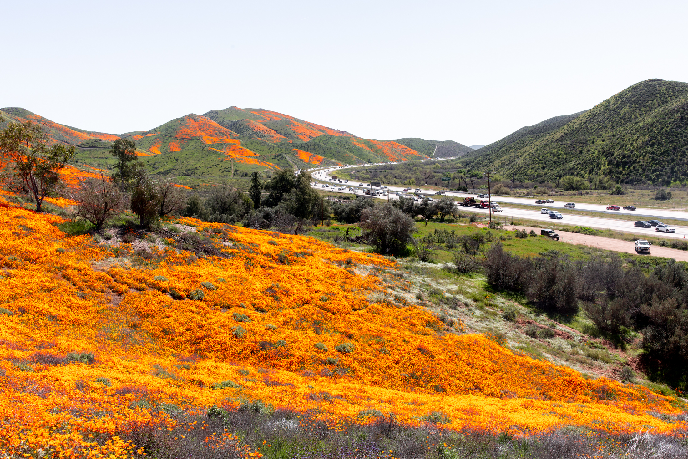 "California Day-trip: Lake Elsinore Poppy ""Super Bloom"""