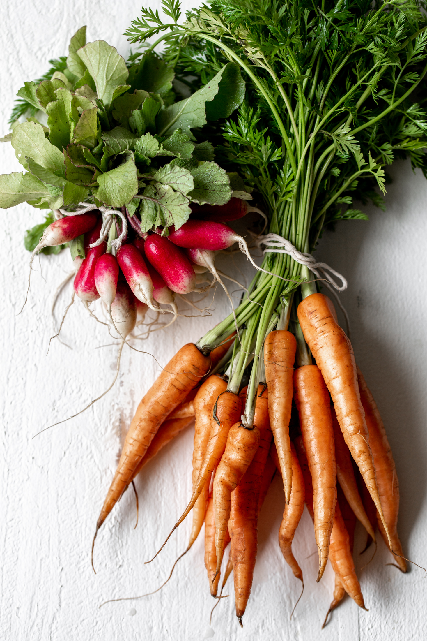 spring vegetables ingredient shot radish and carrots
