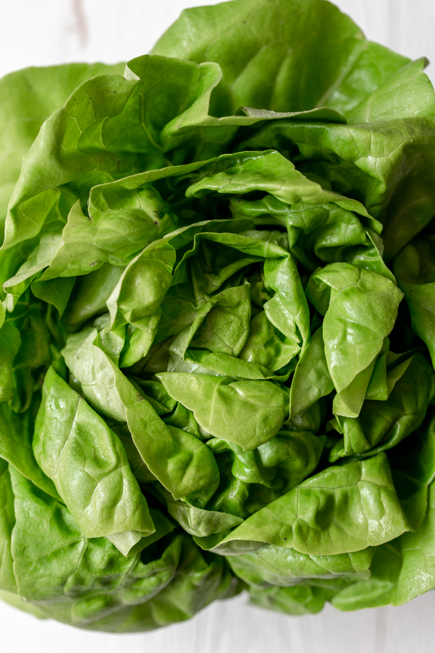 butter lettuce ingredient shot