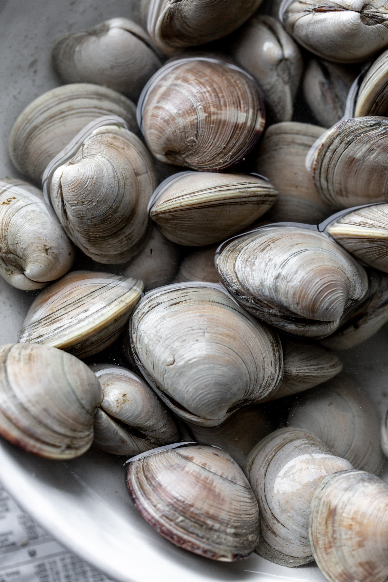 clams in water ingredient shot