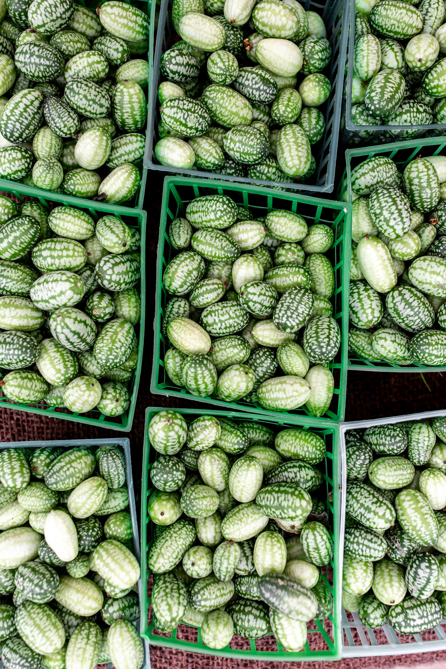 cucamelons ingredient shot from the santa monica farmers market