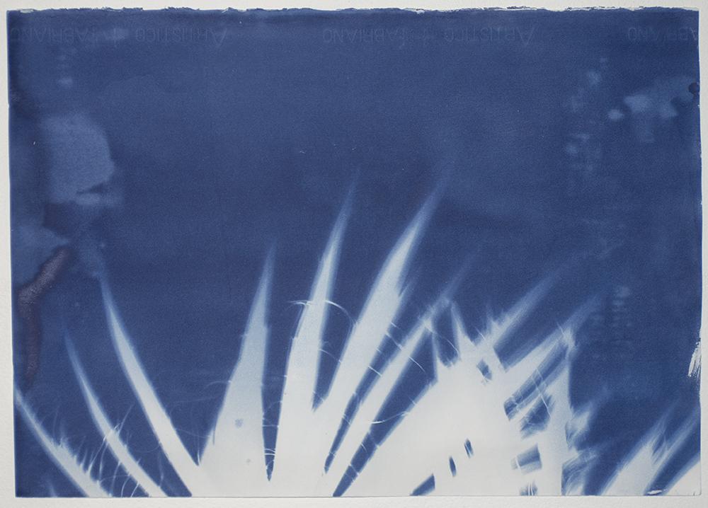 Madison_No24_Yucca.jpg
