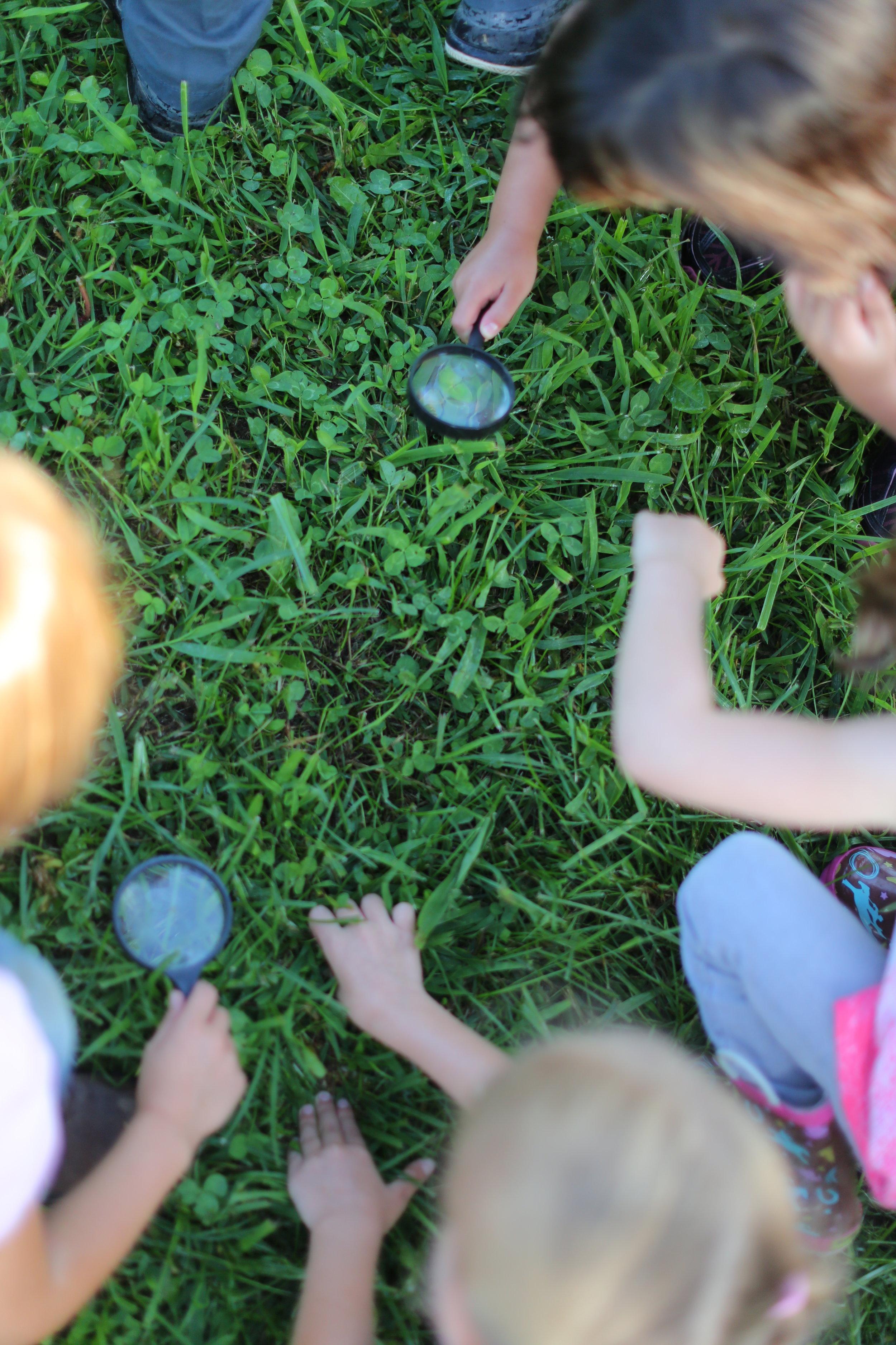 magnify grass.JPG