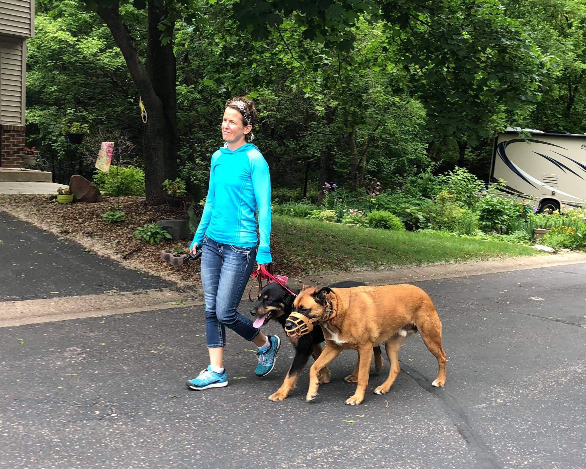 Dog Training Saint Paul MN reactivity leash aggression