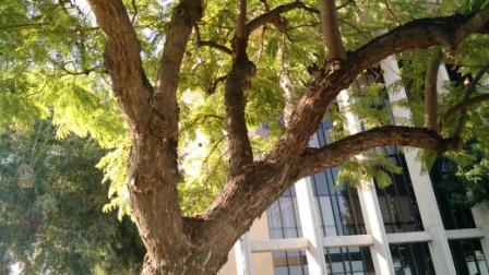 arborist-tree.jpg