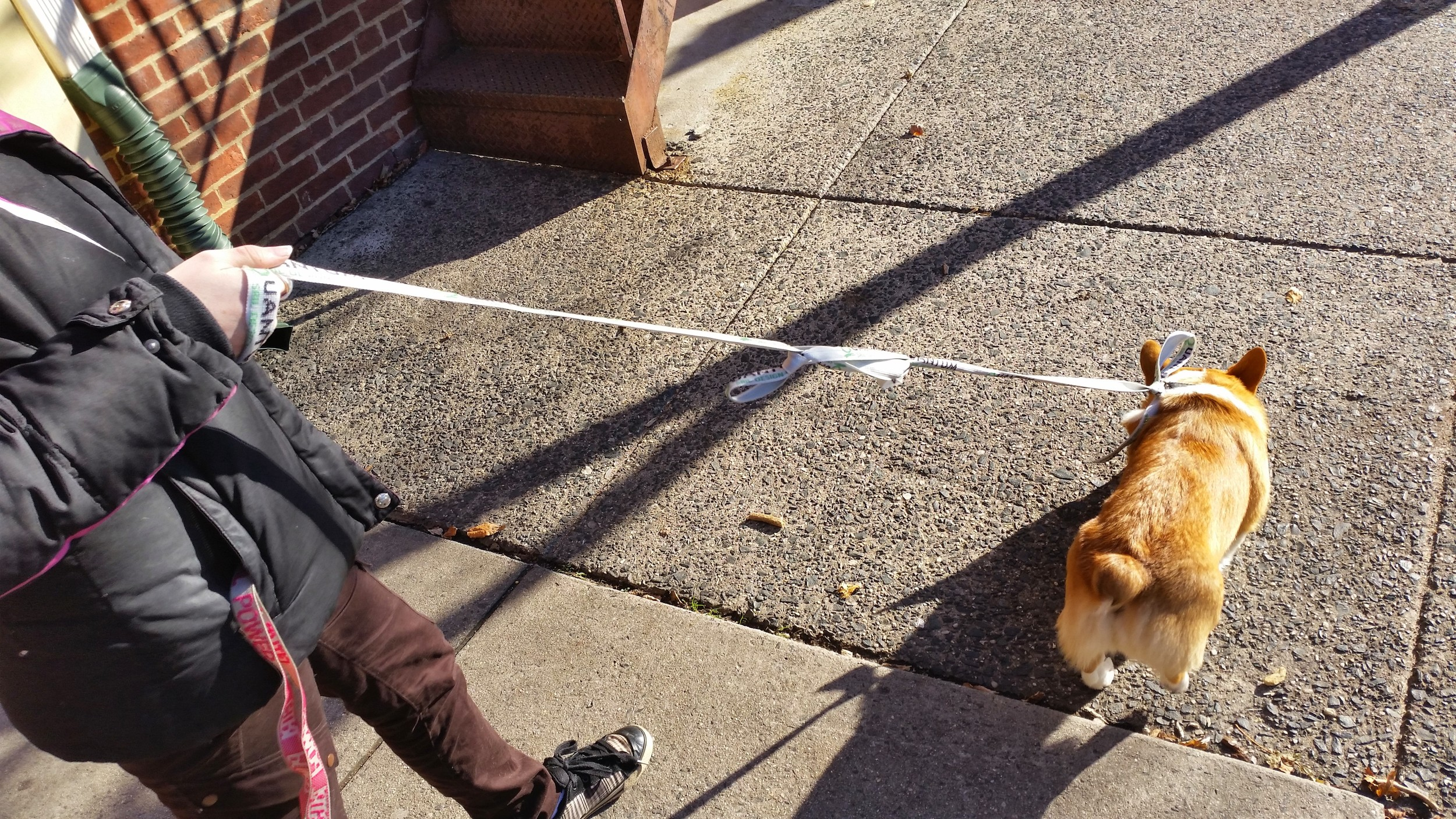 As a true boat dog, his leash is a sail tie.