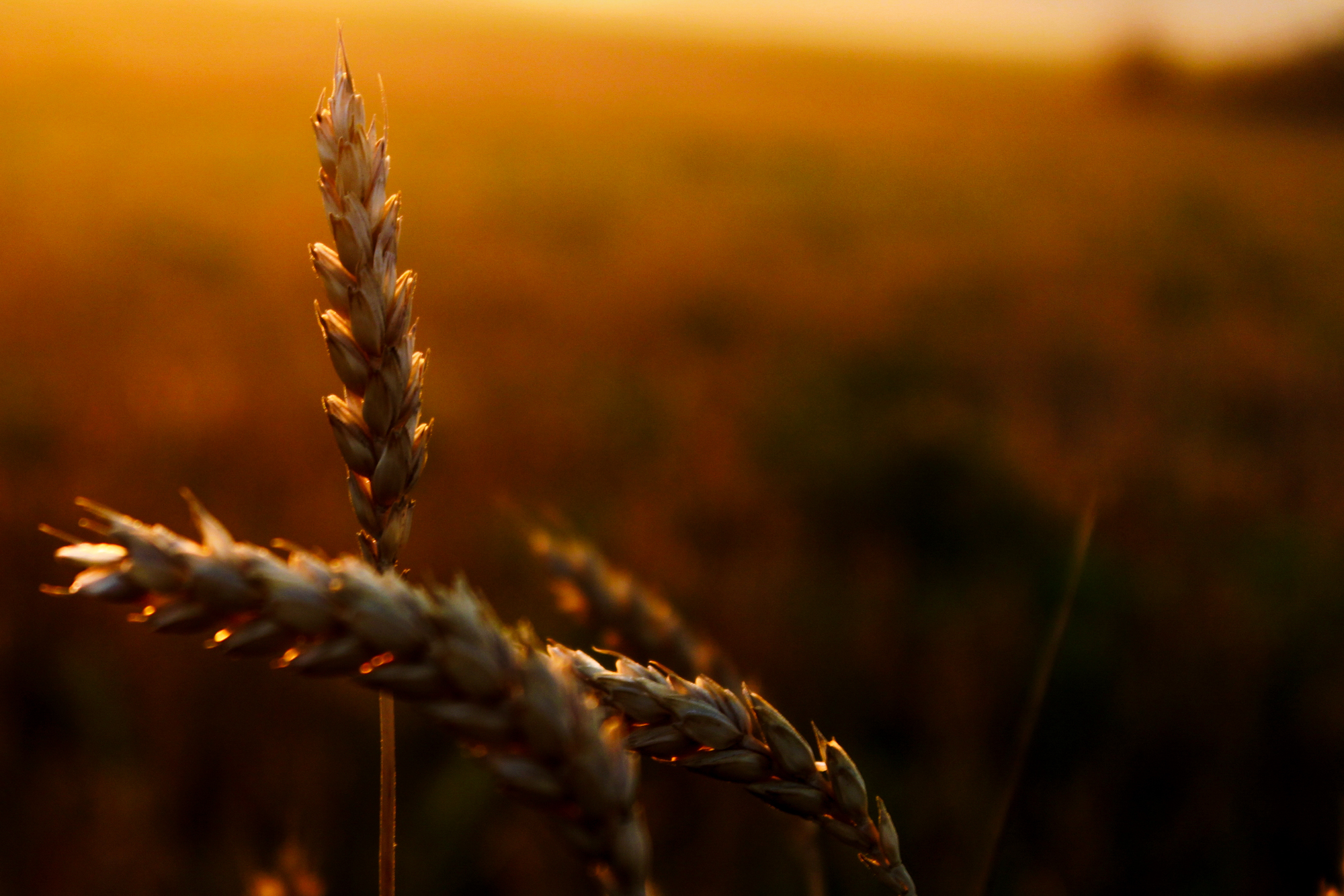 Gentle Morning Light on the Grasses