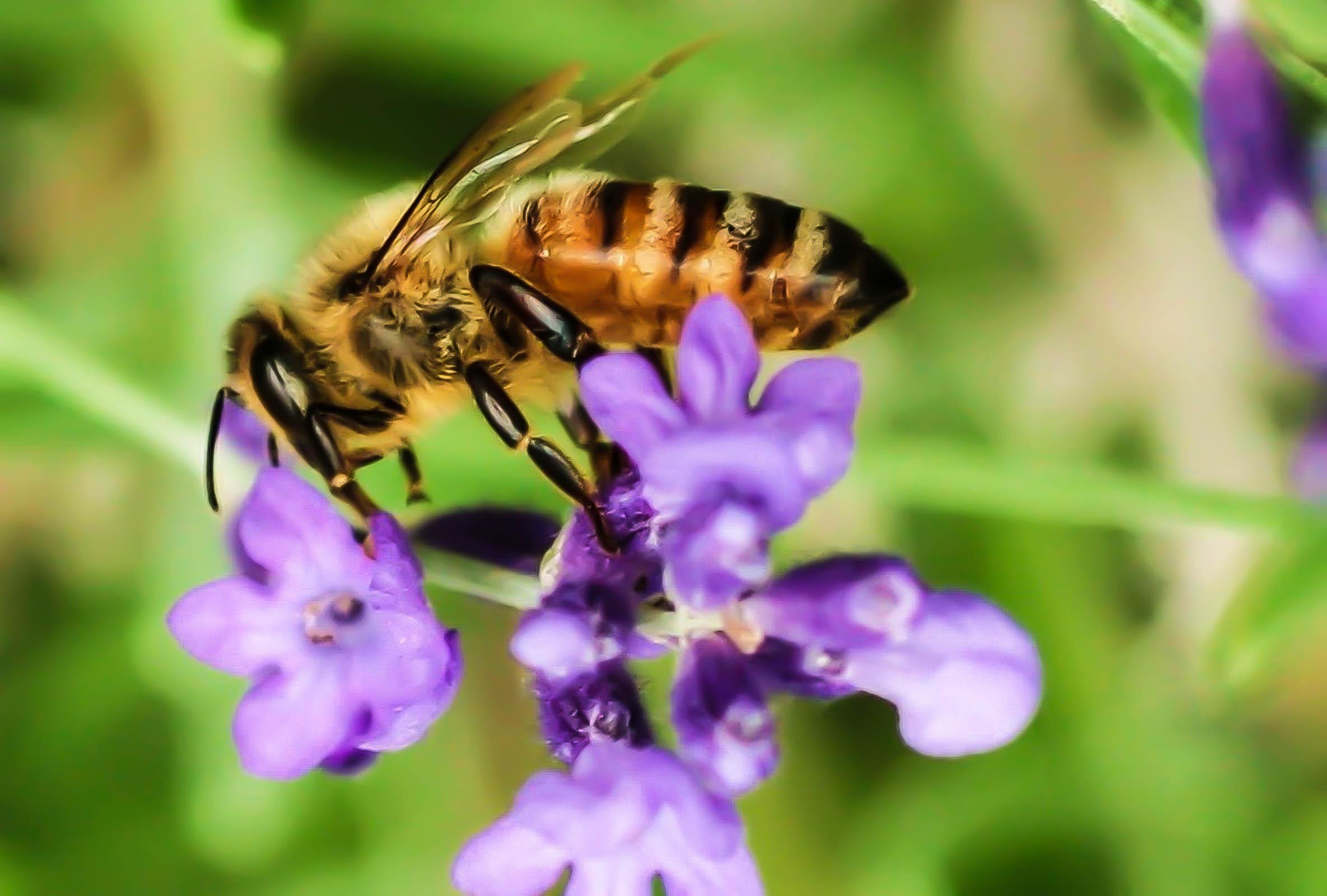 Bees--July 4 2009 186-3.jpg