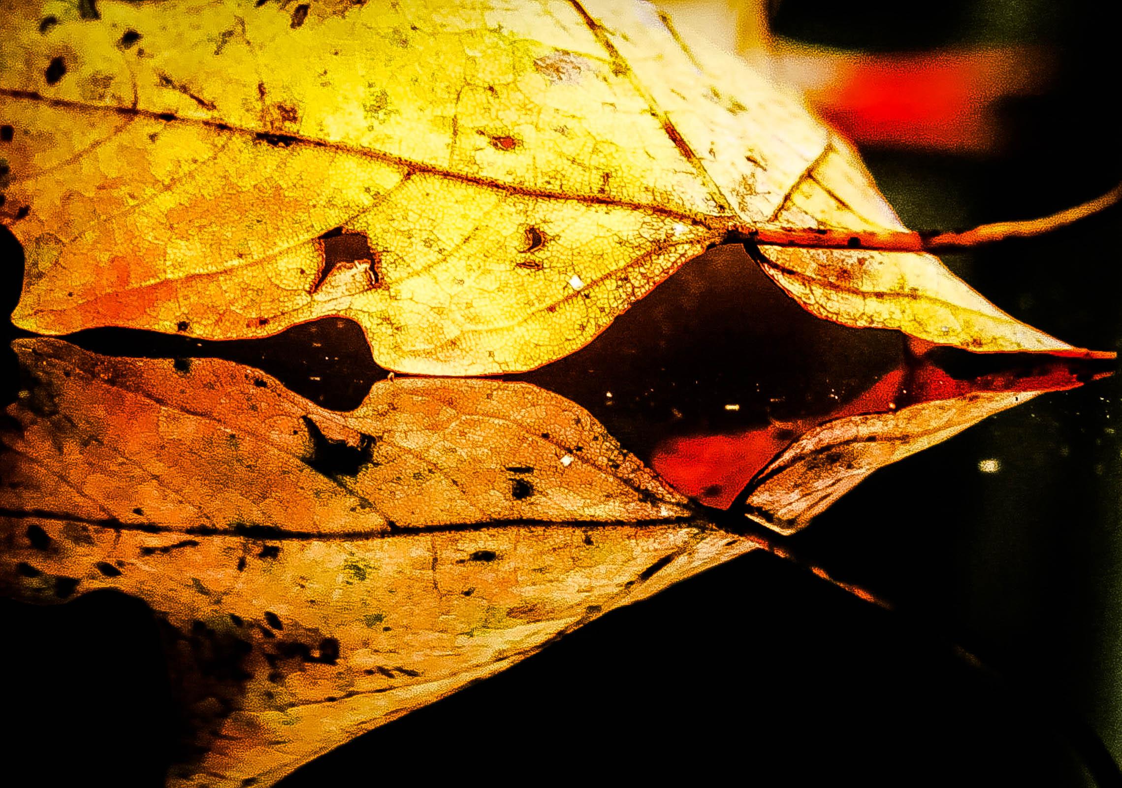 Chautauqua Fall 2011 023-3.jpg
