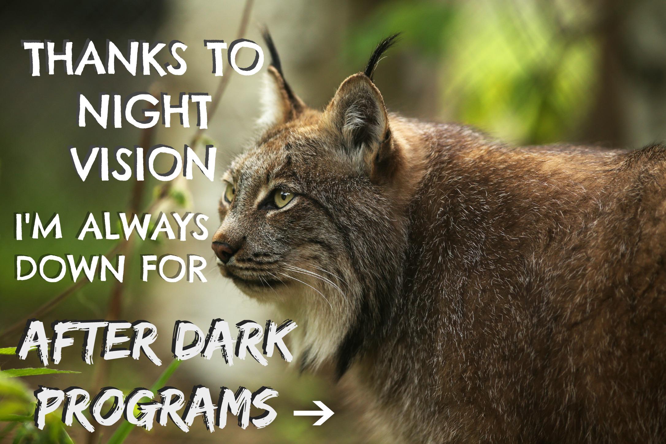3-lynx-program-wsc-evening-24.jpg