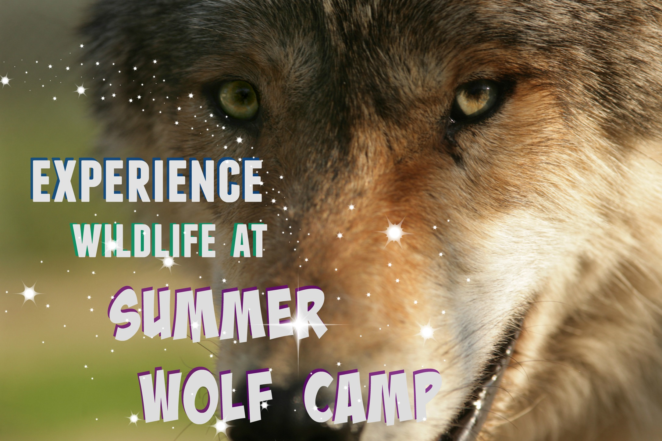 4-wolf-wsc-mn-program-25.jpg
